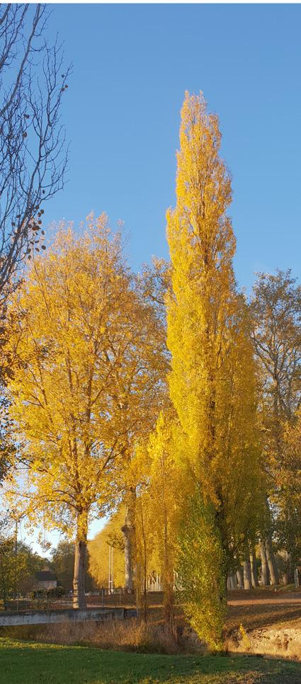 automneBis